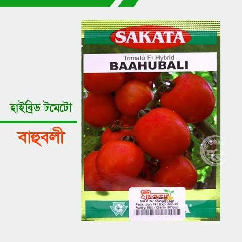 হাইব্রীড জাতের টমেটো বাহুবলী Bahuboli-Tomato
