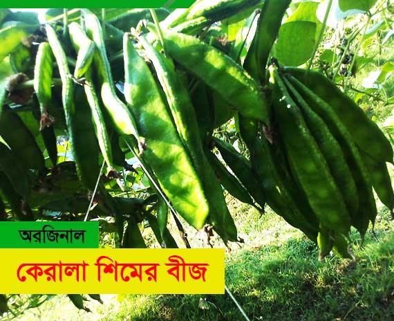 কেরালা ১ শিম বারোমাসি জাত Kerala beans