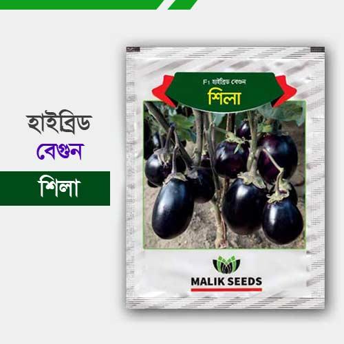 হাইব্রিড বেগুন বীজ-শিলা Sheela Brinjal Begun-Shila
