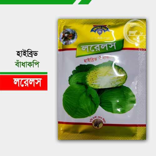লরেলস হাইব্রিড বাঁধাকপি Hybrid Cabbage Laurels