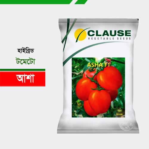 হাইব্রিড টমেটো আশা Tomato Asha