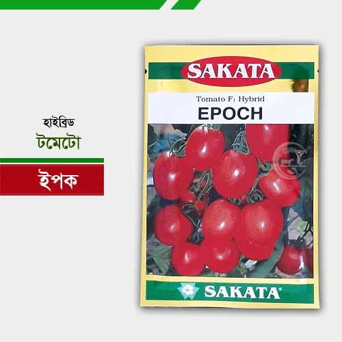 হাইব্রিড টমেটো ইপক Tomato Epoch
