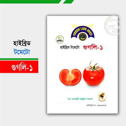 হাইব্রিড টমেটো গুগলি-১ tomato googli