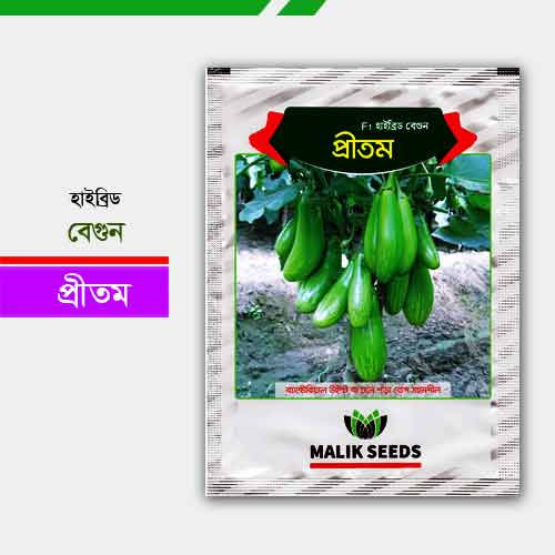 হাইব্রিড বেগুন প্রীতম Brinjal Pritam