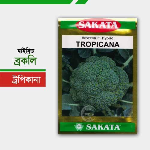 হাইব্রিড ব্রকলি ট্রপিকানা Tropicana
