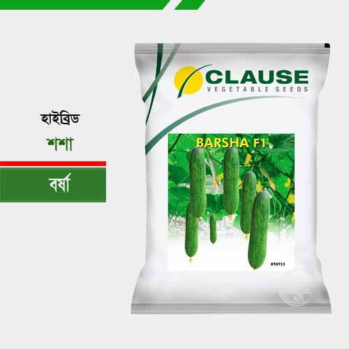 হাইব্রিড শশা বর্ষা Cucumber Barsha