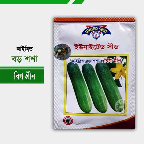 হাইব্রিড শশা বিগগ্রীন বড় জাতের Hybrid cucumber Big Green